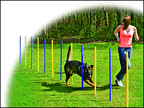 Slalom DOG FANTASY Agility